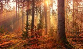 parco-nazionale-delle-foreste-casentinesi